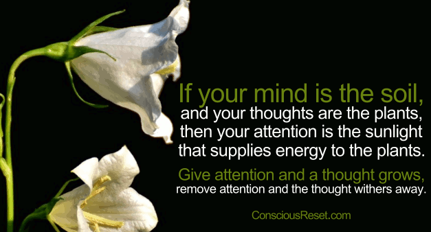 Mind attention quote